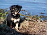 Keisha - A Playful Pup
