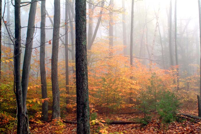 Fog envelopes the forest near Barbour Rock