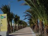 ...or Palm Corridor?