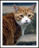 ds20050506_0128awF Cat.jpg