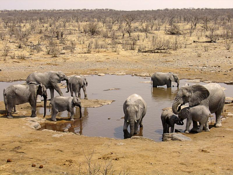 The elephants.jpg