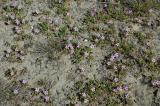 Purple Flowers Carpet