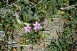 Pair of Purple Flowers