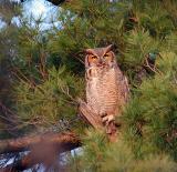Mother owl babysitting