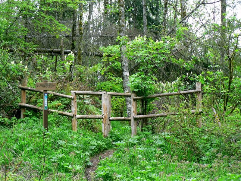 Hidden Forest Gate