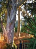 thru trees.JPG