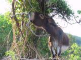 Eeyore in Kroatien