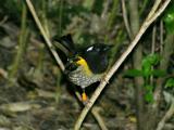 Stitchbird.jpg