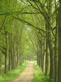 Arnhem - Mariendaal