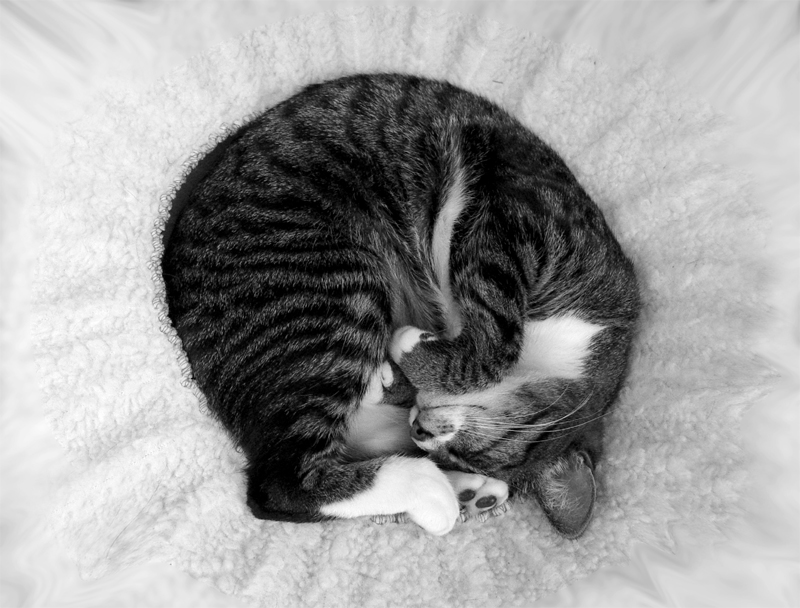 Cat in Liquified Bed