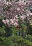 Early Spring 2005A.jpg