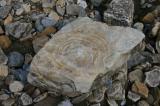 Rock or Wood.jpg