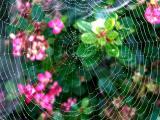 040820 Spider Web
