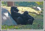 Gorilla - CRW_0551 copy.jpg