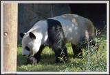 Panda - CRW_0573 copy.jpg