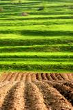 abstract agriculture