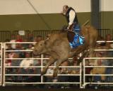 Bull Riders