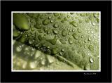 Water on vegetal