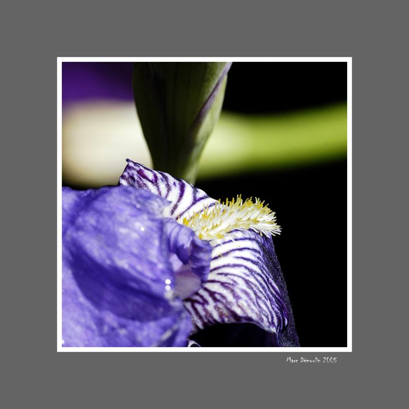 Floral 15