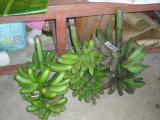banane a lap lap ou tuluk