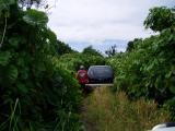 in the bush-