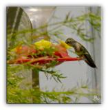 Another Hungry Hummer