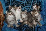 The kittens were nice enough to pose in a group.