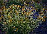 Desert Flora 7355
