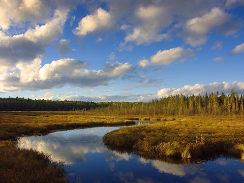 Spruce Bog at Sunset 6078