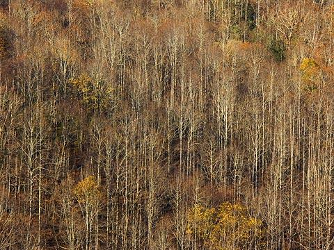 Bare Mountain Trees 6645
