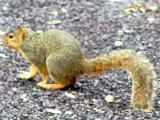 squirrell.jpg(129)