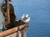 Fraserburgh, Port and Seagulls