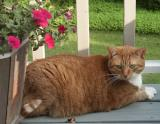 the_fat_cat