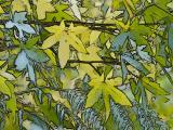 Wellington Botanic Gardens in Autumn