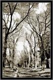 TreesBW.jpg