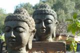 Buddhahead-03_1.gif