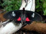 Butterfly - San Diego Wild Animal Park in Escondido