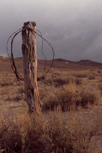 Genevieve Moyer: Fence Post
