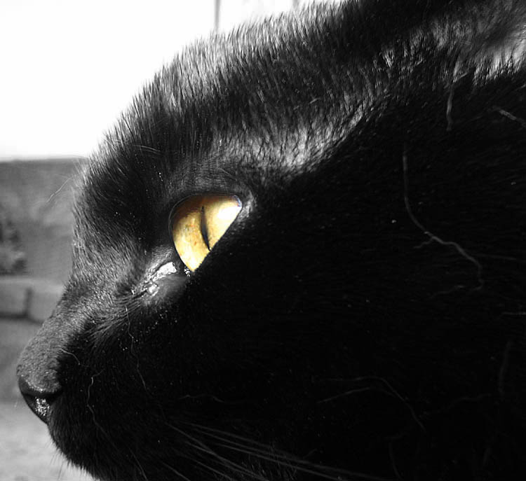 Jaspers eye