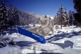 snowcat2.jpg