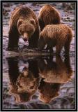 Grizzlies Clam Digging