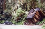 Humboldt Redwoods State Park,California
