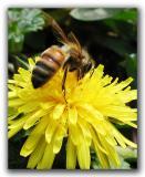 first-bee.jpg