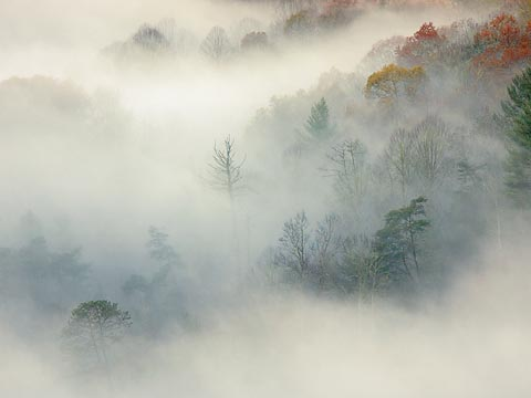 Trees in the Clouds6907