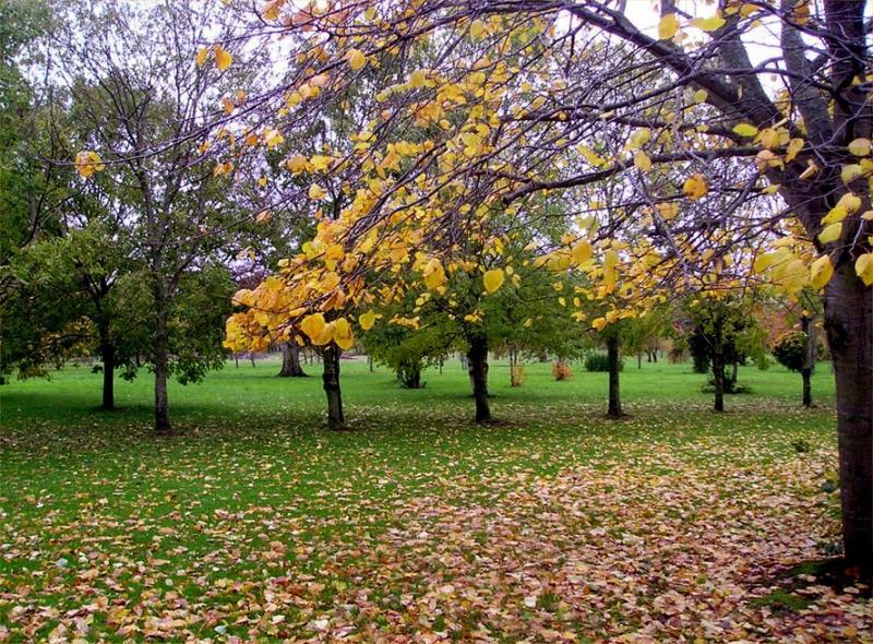 Tralee Park