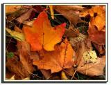 fall0001.JPG