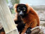 Edinburgh Zoo - Part 1