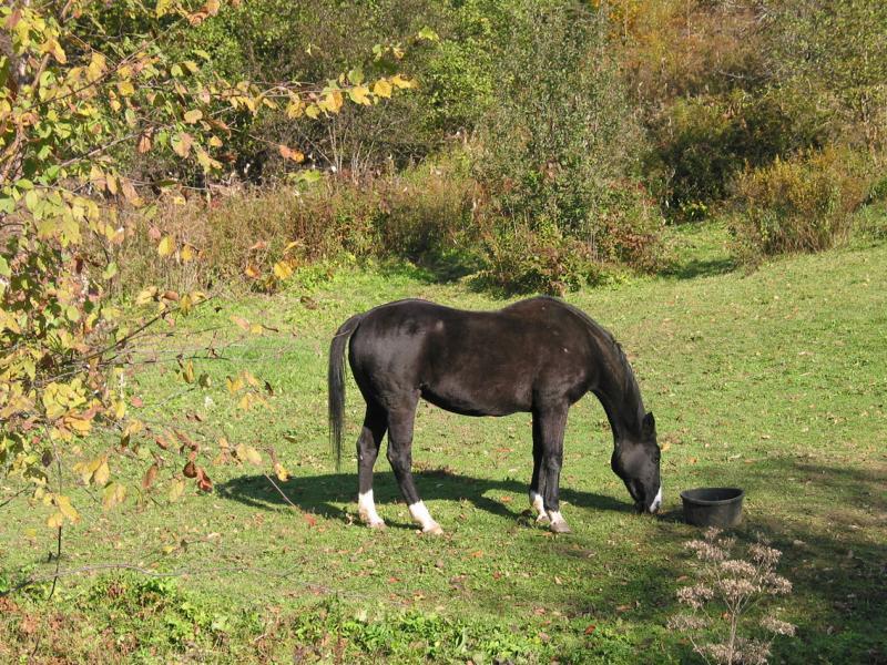 Black and white horse near the farm