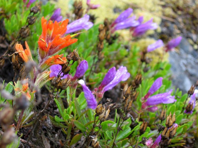 Orange & purple flowers