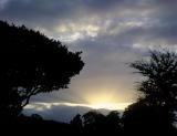 6x6 003 SunriseTrees.jpg